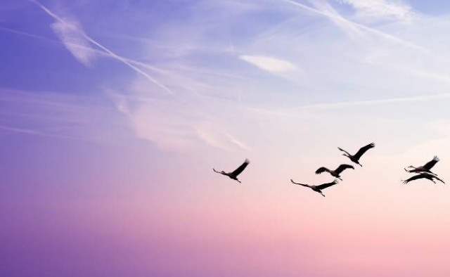 Beautify sky with bird soaring